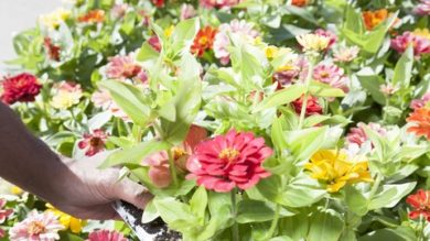 Basics of Therapeutic Horticulture | Personal Development Other Personal Development Online Course by Udemy