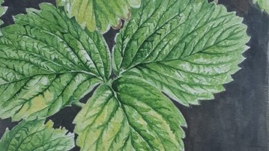 Learn to draw and paint leaves in watercolour | Personal Development Happiness Online Course by Udemy