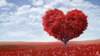 How To Love On Purpose | Personal Development Personal Transformation Online Course by Udemy