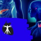 Fisiologia do Sistema Endcrino | Teaching & Academics Science Online Course by Udemy