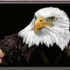 Draw an eagle with the android Paintology app | Personal Development Creativity Online Course by Udemy