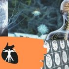 Neurofisiologia Bsica | Teaching & Academics Science Online Course by Udemy