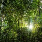 Recuperao Ambiental | Teaching & Academics Science Online Course by Udemy