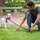 Adiestramiento Canino | Teaching & Academics Other Teaching & Academics Online Course by Udemy