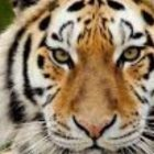 Tiger Reiki | Personal Development Personal Transformation Online Course by Udemy