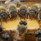 Zen Beekeeping for the Beginner | Lifestyle Pet Care & Training Online Course by Udemy
