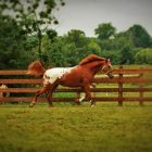 Know Your Horse Personally | Lifestyle Pet Care & Training Online Course by Udemy