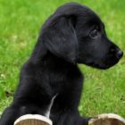 Puppy workshop: Learn how to exercise your puppy safely. | Lifestyle Pet Care & Training Online Course by Udemy