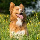 Flower Essences for Anxious Dogs | Lifestyle Pet Care & Training Online Course by Udemy