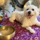 Sound Therapy & Energy Healing for Animals | Lifestyle Pet Care & Training Online Course by Udemy