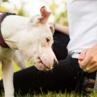 Mind Your Manners | Lifestyle Pet Care & Training Online Course by Udemy