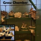 How To Grow Mushrooms At Home Indoors | Lifestyle Other Lifestyle Online Course by Udemy