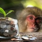 Money Making Monkey - Make Money Online in 2021 | Business E-Commerce Online Course by Udemy