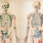 Basic human anatomy & physiology | Business Other Business Online Course by Udemy